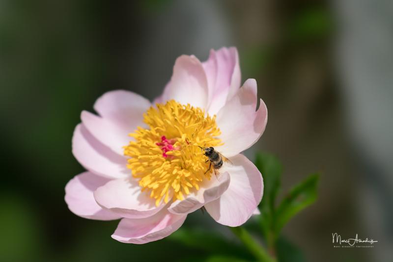 Jardin fleurs - 2017-05 FE100STF-0005