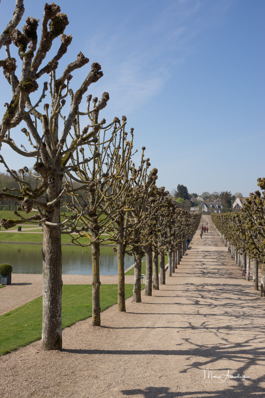 Jardins du Château Villandry-037