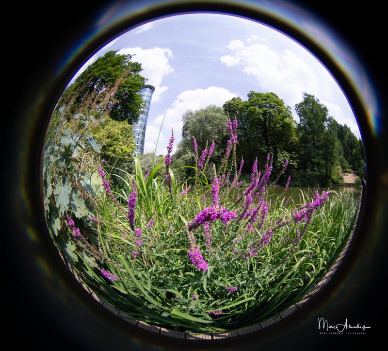 Lensbaby 5.8mm F3.5 Circular Fisheye- ISO 100-1-640 s 009